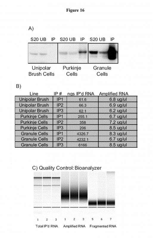 Prtg Report Templates Unique Us9816096b2 Methods and Compositions for Translational Profiling