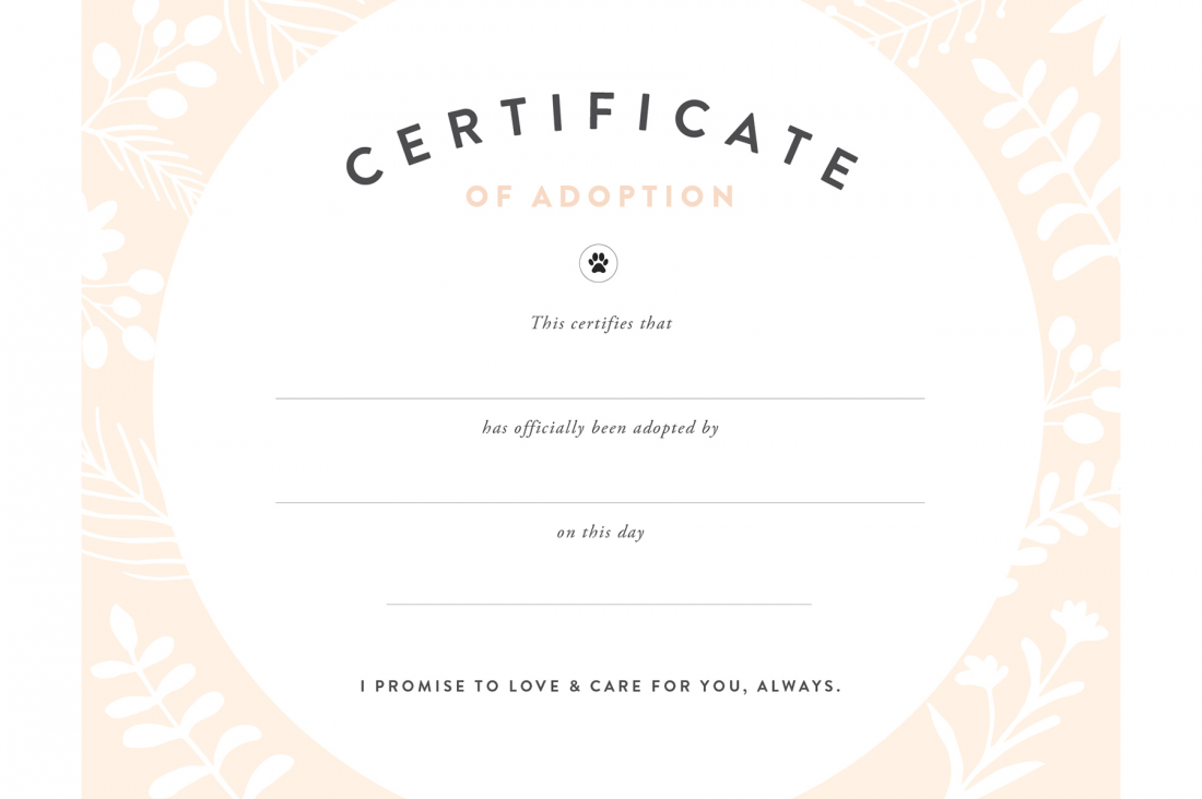 Toy Adoption Certificate Template 5