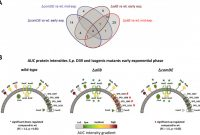 1.5 Circle Label Template Unique In Vivo Proteomics Identifies the Competence Regulon and