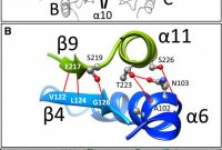 99.1 Mm X 38.1 Mm Label Template Unique Crystal Structure Of the Ligand‐binding Domain Of A Lysr