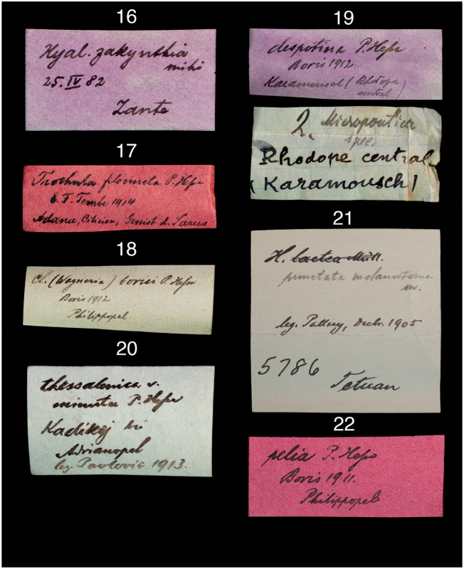 Address Label Template 16 Per Sheet New The Paul Hesse Collection At The Academy Of Natural Sciences