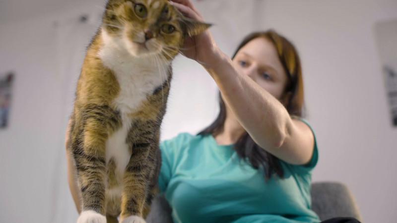 Blank Cat In The Hat Template Unique Catz Finefood Purrrr Monoprotein Katzenfutter Nass Ka¤nguru Huhn Lachs Lamm Schaf Und Schwein 6 Dosen Sortenrein Oder Im Multipack 190g 200g