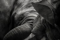 Blank Elephant Template New iPhone Black and White Elephant Wallpaper