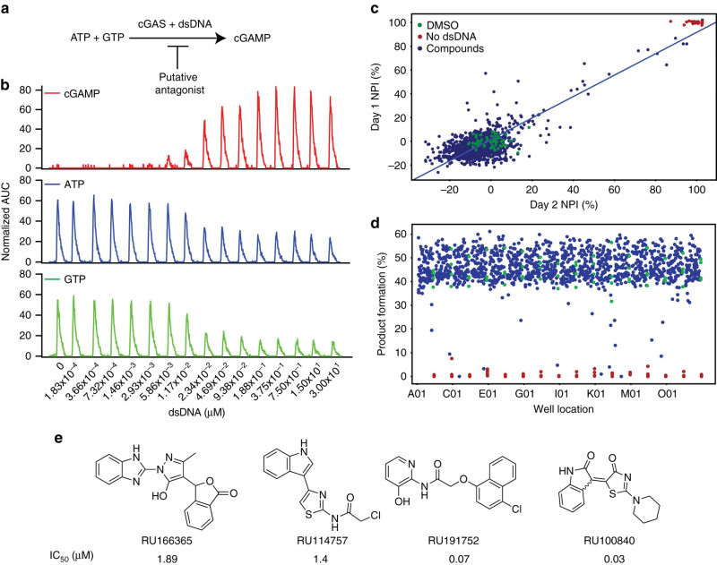 Blank Family Tree Template 3 Generations New Small Molecule Inhibition Of Cgas Reduces Interferon