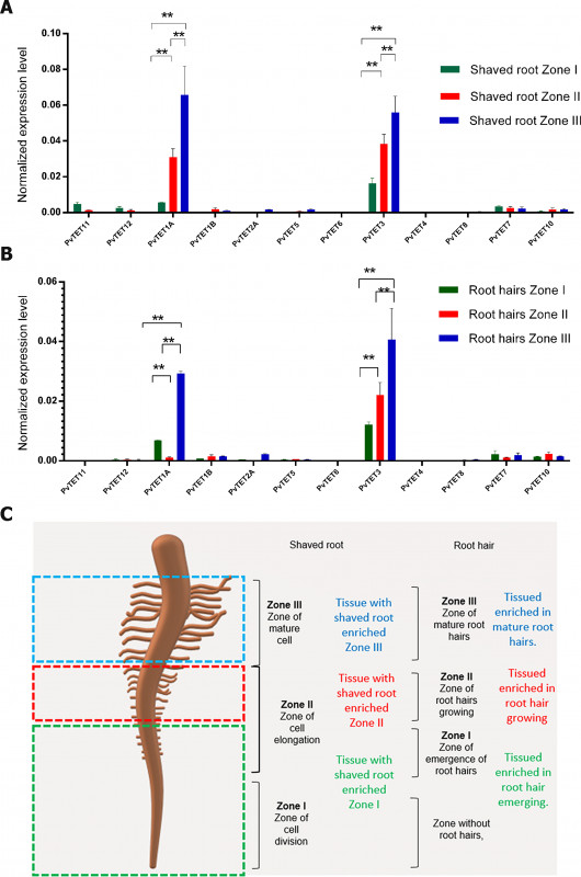 Blank Stem And Leaf Plot Template New Differential Tetraspanin Genes Expression And Subcellular