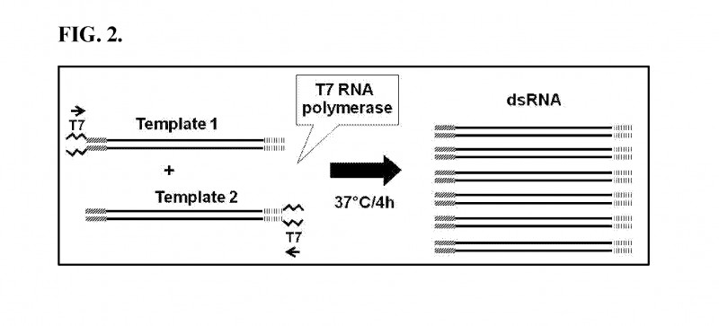 Egg Carton Labels Template New Us20170218391a1 Gawky Gw Nucleic Acid Molecules To