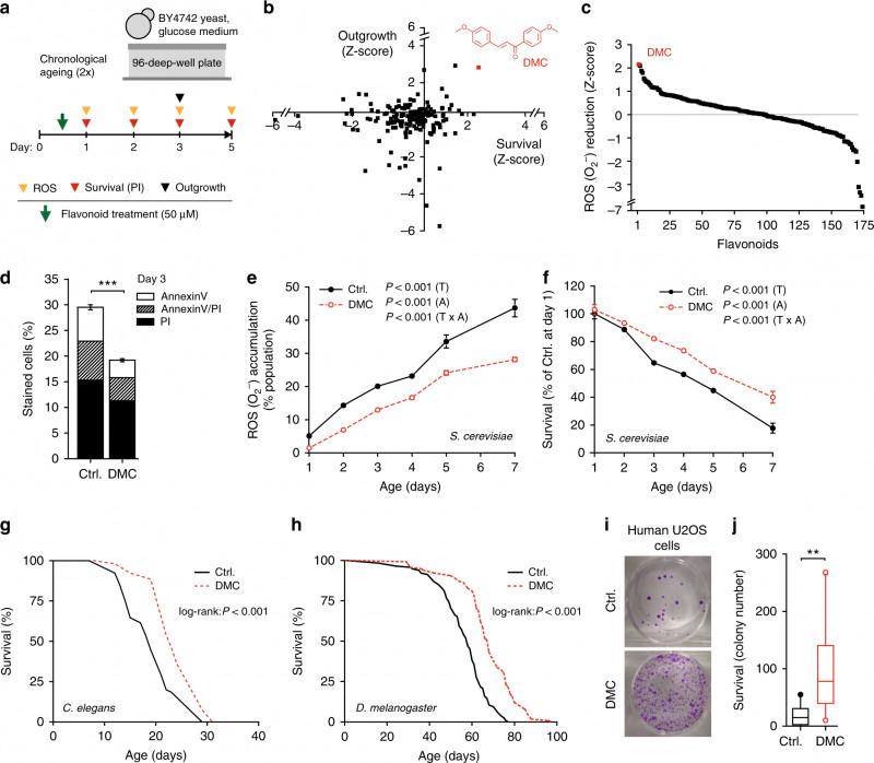 Egg Carton Labels Template Unique the Flavonoid 44′ Dimethoxychalcone Promotes Autophagy