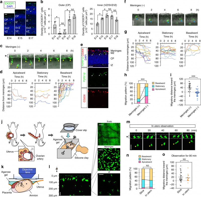 Free Bio Template Fill In Blank Awesome Transient Microglial Absence Assists Postmigratory Cortical