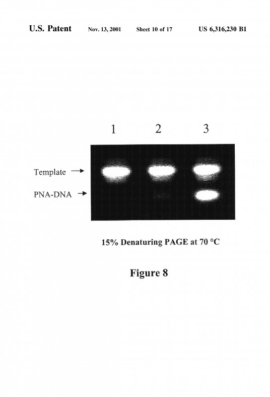 Hershey Labels Template New Us6316230b1 Polymerase Extension At 3′ Terminus Of Pna Dna