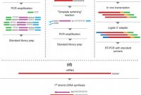 Q Connect Label Template Awesome Rna‐seq Methods for Transcriptome Analysis Hrdlickova