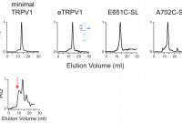 Science Fair Labels Templates Awesome Purification and Reconstitution Of Trpv1 for Spectroscopic