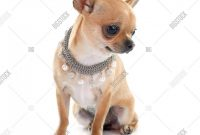 Dog Grooming Record Card Template New Http Www Bigstockphoto Mx Image 93713759 Stock Photo