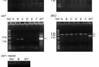 Photography Referral Card Templates Awesome Genome Scale Investigation Of Phenotypically Distinct but