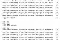 Template for Membership Cards Unique Ep2392668a2 Kontrollgene Zur normalisierung Von
