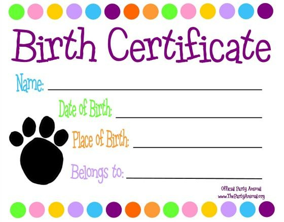 Pinholly Bufalino On The Doc Is In | Pet Adoption Throughout Fresh Stuffed Animal Birth Certificate Template 7 Ideas