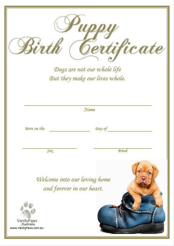 Puppy Birth Certificate - Blue Shoe (Instant Download) | Dog With Dog Birth Certificate Template Editable